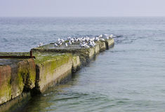 Seagulls σε μια παλαιά αποβάθρα Στοκ φωτογραφία με δικαίωμα ελεύθερης χρήσης