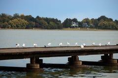 Seagulls στάση στην αποβάθρα Στοκ εικόνα με δικαίωμα ελεύθερης χρήσης