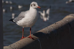 Seagulls στάση Στοκ φωτογραφία με δικαίωμα ελεύθερης χρήσης
