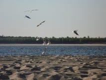 Seagulls στην ακτή στοκ φωτογραφίες