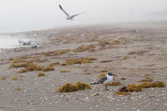 Seagulls στην ακτή Στοκ φωτογραφία με δικαίωμα ελεύθερης χρήσης