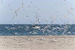 Seagulls στην ηλιόλουστη παραλία Στοκ φωτογραφία με δικαίωμα ελεύθερης χρήσης
