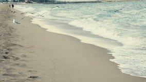 Seagulls στην παραλία που πετά στη κάμερα απόθεμα βίντεο