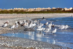 Seagulls στην παραλία στοκ εικόνες