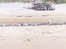 Seagulls στην παραλία Στοκ εικόνα με δικαίωμα ελεύθερης χρήσης