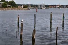 Seagulls στην πρόσδεση Πολωνοί στοκ εικόνες με δικαίωμα ελεύθερης χρήσης