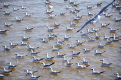 Seagulls στην Ταϊλάνδη Στοκ φωτογραφίες με δικαίωμα ελεύθερης χρήσης