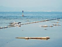 Seagulls στη λίμνη στην Ιταλία Στοκ εικόνα με δικαίωμα ελεύθερης χρήσης
