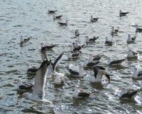 Seagulls στη λίμνη Στοκ εικόνες με δικαίωμα ελεύθερης χρήσης