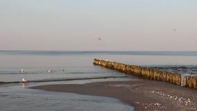 Seagulls στη βαλτική παραλία με το φως πρωινού απόθεμα βίντεο