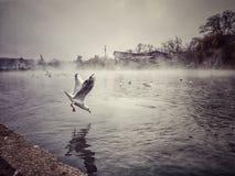 Seagulls στη λίμνη Στοκ Εικόνες