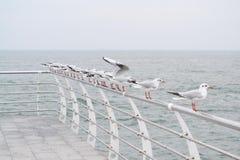 Seagulls στη σειρά Στοκ Εικόνες