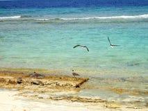 Seagulls στη δύσκολη ακτή Στοκ φωτογραφία με δικαίωμα ελεύθερης χρήσης