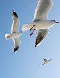 Seagulls στον ουρανό Στοκ Φωτογραφία