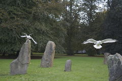 Seagulls στους βράχους Στοκ Εικόνες