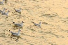Seagulls στο ηλιοβασίλεμα Στοκ εικόνα με δικαίωμα ελεύθερης χρήσης