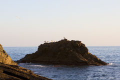 Seagulls στο ηλιοβασίλεμα Στοκ εικόνες με δικαίωμα ελεύθερης χρήσης