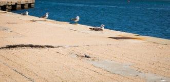 Seagulls στο λιμάνι Στοκ φωτογραφία με δικαίωμα ελεύθερης χρήσης