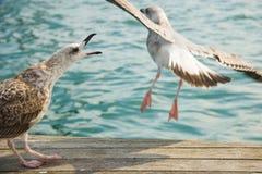 Seagulls στο λιμένα της Βαρκελώνης Στοκ φωτογραφία με δικαίωμα ελεύθερης χρήσης
