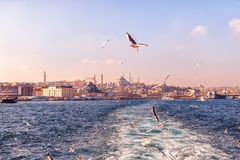Seagulls στο στενό του Βοσπόρου και το ευρωπαϊκό μέρος της Ιστανμπούλ Στοκ Φωτογραφία