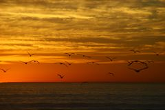 seagulls του Queensland mooloolaba ακτών της Αυστραλίας πετώντας που λαμβάνεται ηλιοφάνεια Στοκ εικόνες με δικαίωμα ελεύθερης χρήσης
