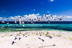seagulls του Queensland mooloolaba ακτών της Αυστραλίας πετώντας που λαμβάνεται ηλιοφάνεια Στοκ Εικόνες