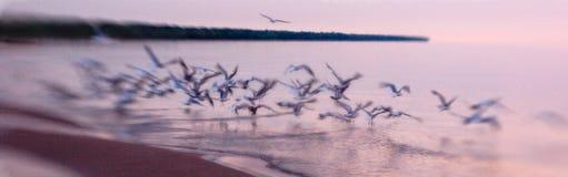 Seagulls τρέπονται σε φυγή στοκ φωτογραφίες