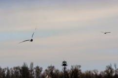 seagulls φύσης seascape ουρανός Στοκ Φωτογραφίες