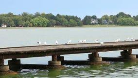 seagulls stock video