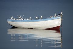 Seagulls. Are resting on the boat Stock Photo