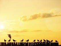 seagulls Στοκ Εικόνες