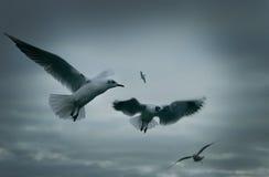 Seagulls-3 Стоковые Изображения