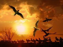 Free Seagulls Stock Photography - 3792672