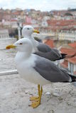 Seagulls. On the top of the building Royalty Free Stock Photos