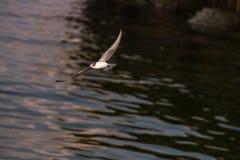 seagulls Obrazy Stock