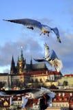 Seagulls Στοκ Φωτογραφία