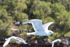 3 seagulls Στοκ Φωτογραφίες