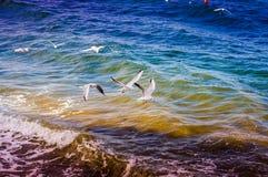 Seagulls που πετούν πέρα από τη θάλασσα Στοκ Εικόνα