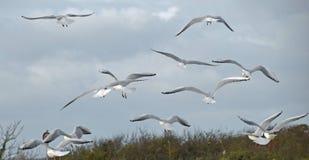 seagulls fotografia stock