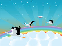 Seagulls. Flying on the clouds Stock Images