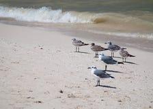 Seagulls Στοκ εικόνα με δικαίωμα ελεύθερης χρήσης