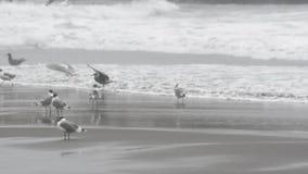 seagulls arkivfilmer