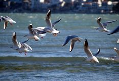 Seagulls. By the sea Royalty Free Stock Photography