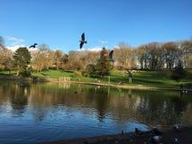 seagulls Arkivbilder