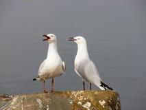 seagulls Στοκ Εικόνα