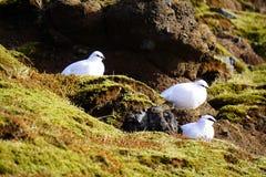 Seagulls Στοκ εικόνες με δικαίωμα ελεύθερης χρήσης