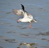 seagulls Obraz Stock