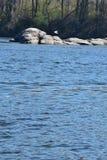 2 seagulls Zdjęcie Stock