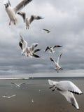 seagulls Zdjęcie Stock