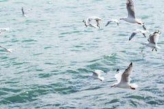 seagulls Royaltyfri Fotografi